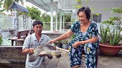 Hậu Giang: Độc đáo nuôi những con cua đinh to bự ngay cạnh nhà, tiềm năng nuôi thủy sản rất lớn