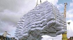 Giá gạo Việt Nam đã tiến kịp gạo Thái Lan, có lúc còn cao hơn