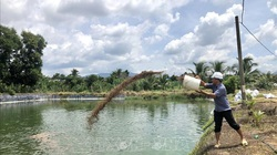 Thu tiền tỷ từ mô hình nuôi cá rô phi
