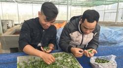 Loài lan quý hiếm nào vừa được một trung tâm nghiên cứu của tỉnh Gia Lai nhân giống thành công?