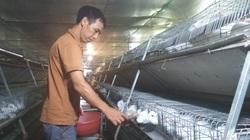 Anh Toàn nuôi thỏ kiểu này mà khiến người Nhật phải sang tận nơi mua về làm thuốc quý