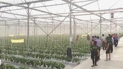 Clip: Nhà kính sản xuất rau sạch nghìn tỷ ở Hải Phòng có gì đặc biệt mà ai đến xem cũng bất ngờ?