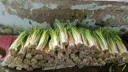 Hậu Giang: Ở nơi này, dân trồng loài rau dại tên nghe mắc cười hái đọt non đem bán người mua nhanh còn kịp