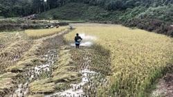 Giúp người dân nâng cao thu nhập, từng bước cán đích nông thôn mới