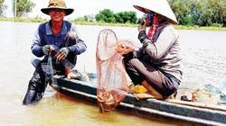 An Giang: Mùa lũ thấp dân buồn đành đi bắt chuột, giá rắn đồng, cua đồng tăng cao chót vót