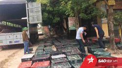 9X Bắc Giang và hành trình khởi nghiệp mạo hiểm với nghề nuôi chim bồ câu siêu đẻ