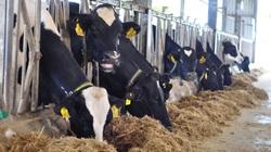 """Bảo hiểm Agribank: """"Quẳng"""" gánh lo...trắng tay trong sản xuất nông nghiệp"""