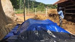 """Phú Yên: Đi nhặt thứ vứt đi ủ thành loại phân bón cho cây nào cây ấy """"khỏe như vâm"""""""