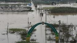 Đà Nẵng: Tan hoang những cánh đồng trăm tỷ sau bão lũ, lợn gà, cá tôm trôi đi mất tích