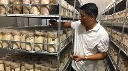 Trồng thứ nấm mới lạ công nghệ cao, bán tới 300 ngàn/ký, một ông nông dân tỉnh Bình Thuận bất ngờ trúng lớn