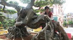 Phú Thọ: Giấu chồng, người phụ nữ mang 5 tỷ thuê xe vào rừng mua bằng được sanh cổ dáng quái