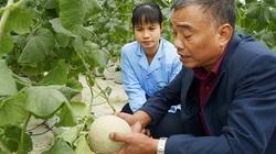 """Bắc Giang: Nhà nông """"lên đời"""" từ tổ hợp tác, mê làm nông nghiệp công nghệ cao"""