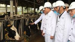 Sắp khởi công dự án bò sữa hơn 2.500 tỷ đồng ở Cao Bằng