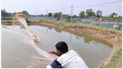 Ngành tôm Ấn Độ đã vượt qua ảnh hưởng của COVID-19 như thế nào?