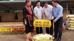 """Mô hình """"nông dân dạy nông dân, cầm tay chỉ việc"""" ở tỉnh Quảng Ninh có gì hay mà nên nhân rộng?"""