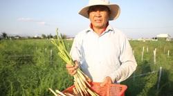 Thủ tướng Chính phủ vừa ban hành Quyết định công nhận huyện nào của tỉnh Ninh Thuận đạt chuẩn nông thôn mới?