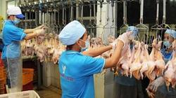 Giá gia cầm hôm nay 18/10: Chuyên gia bày cách tăng tốc ngành chăn nuôi gà, vịt