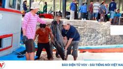 EVFTA mở ra nhiều cơ hội cho cá ngừ đi châu Âu