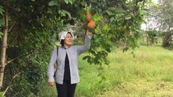 Nhà sáng lập Seed To Table với 23 năm vì nông nghiệp hữu cơ Việt Nam
