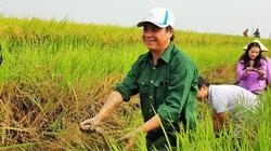 Làm lúa hữu cơ, nhà nông không chỉ bán lúa giá cao mà còn bắt được nhiều tôm cá