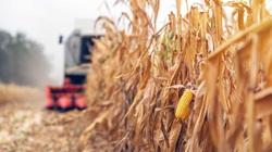 Brazil sẽ bỏ thuế nhập khẩu đối với đậu tương và ngô