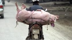 Vì sao giá lợn hơi giảm, thịt đến tay người tiêu dùng vẫn đắt?