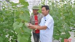 Hợp tác xã ở Hà Tĩnh thuê chuyên gia Israel dạy cách trồng dưa lưới