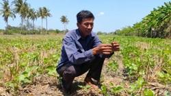 Cà Mau: Hạn hán làm thiệt hại khoảng 800 tỷ đồng