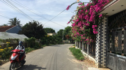 Ninh Thuận: Rực rỡ tuyến đường hoa ở nông thôn
