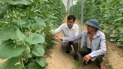 Bắc Giang: Trồng 5.000m2 mà hái được 15 tấn dưa lưới, ông nông dân này lãi 300 triệu/vụ