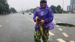 Trong mưa lũ: Người dân Hà Tĩnh đổ xô ra đường bắt cá
