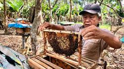 Ở đây nông dân vay tiền lãi suất ưu đãi để nuôi cá lồng đặc sản, nuôi ong mật