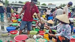 Hậu Giang: Mưa nhiều, cá đồng dồi dào, dân thở phào vì được ăn ngon giá rẻ