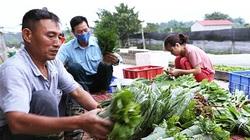 Hà Nội thúc đẩy xây dựng nông nghiệp hữu cơ: Rõ hiệu quả nhưng khó nhân rộng