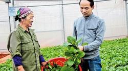 """Bắc Giang: """"Trải thảm đỏ"""" thu hút hàng nghìn tỷ đồng rót vào nông nghiệp"""