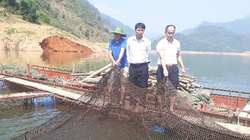 Dạy nghề gắn với hỗ trợ vốn cho nông dân, Lai Châu có gần 4.500 hộ nông dân giỏi