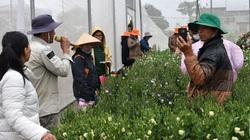 Cát tường cánh đơn là loài hoa gì, đẹp, đắt cỡ nào mà ở đây mở hẳn 1 hội thảo, nhiều nông dân đến xem?