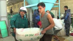 Quảng Trị: Nông dân vùng lũ lụt vui lên nhờ được giúp đỡ điều này