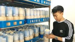 Vay 900 triệu từ Quỹ Khuyến nông Hà Nội, anh nông dân nuôi vịt thả cá, lãi 700 triệu đồng/năm
