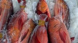 Vì sao cá hồng chuối là loài cá đắt tiền nhưng ở tỉnh Bình Thuận vẫn có nhiều vụ ăn cá này bị ngộ độc?