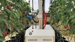 Hiểu rõ 4 xu hướng này, làm nông nghiệp thông minh chắc chắn sẽ thuận lợi