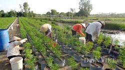 Xuất khẩu sản phẩm nông nghiệp hữu cơ: Chỉ 60 doanh nghiệp, thu về 335 triệu USD