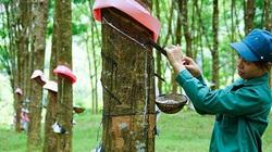 Chủ tịch UBND Bình Phước kỳ vọng chuyển đổi 40.000 ha cao su để phát triển công nghiệp, đô thị