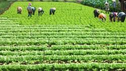 Điều kiện chuyển nhượng đất nông nghiệp