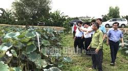 Nam Định: Ở vùng đất này dân trồng thứ cây tốt bời bời, bán được tất tần tật từ lá, hoa, hạt, mầm, củ