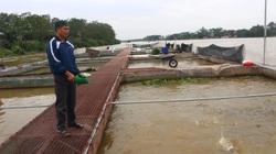 Hưng Yên: Nuôi cá đặc sản trên sông, trồng cây có múi, nông dân liên kết thu tiền tỷ