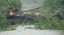 TT-Huế: Hàng trăm nhà dân hư hại, nhiều người bị thương, mất điện trên diện rộng do bão số 9