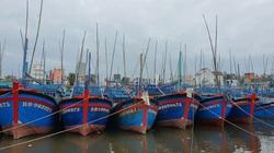 Bão số 12 tại tỉnh Bình Định: 13 ngư dân may mắn thoát chết vụ tàu cá bị hỏng hộp số thả trôi
