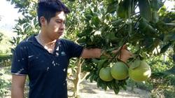 Phù Yên: Cây ăn quả phủ xanh đồi đất trọc