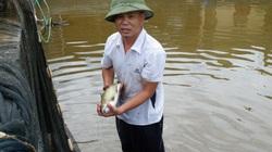 """Vùng đất nuôi hàng nghìn con cá quý hiếm, đều là """"Ngũ quý hà thủy"""", có loài cá còn được ví đẹp như tiên"""